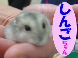 4月のお友達 瑞浪市西小田町 *しんごチャン*