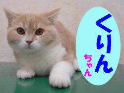 5月のお友達 瑞浪市土岐町 *くりんチャン*