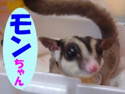 5月のお友達 瑞浪市上平町 *モンちゃん*