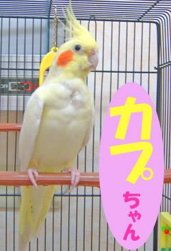 10月のお友達 瑞浪市南小田町 *カプちゃん*    動物病院 健康診断