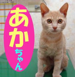 11月のお友達 瑞浪市日吉町 *あかチャン*     動物病院 ノミ・ダニ予防