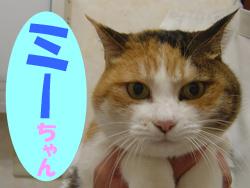 1月のお友達 瑞浪市西小田町 *ミーちゃん*    岐阜県 動物病院