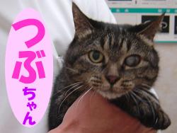 1月のお友達 瑞浪市稲津町 *れんげチャン*    犬 猫 動物病院