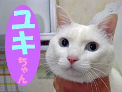 3月のお友達 瑞浪市日吉町 *ユキちゃん*     ワクチン 動物病院