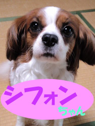 5月のお友達 瑞浪市陶町 *シフォンちゃん*     動物病院 健康診断