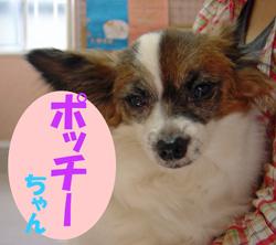 6月のお友達 恵那市明智町 *ポッチーちゃん*    動物病院 健康診断