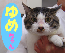 7月のお友達 恵那市山岡町 *ゆめチャン*      動物病院 健康診断
