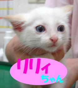 8月のお友達 土岐市駄知町 *リリィちゃん*     動物病院 混合ワクチン