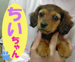 3月のお友達 瑞浪市上野町 *ちいチャン*