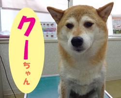 2018.8お友達クーちゃん