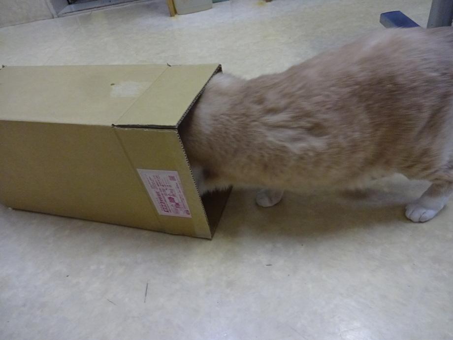 ジャックと箱1
