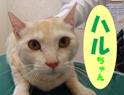 2018.6お友達ハルちゃん