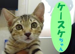 2017.11 ケースケちゃん