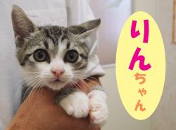 2012.1お友達りんチャン