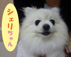 6月お友達 シェリちゃん