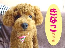 2017.7お友達 きなこちゃん