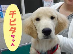 2018.5お友達チビタちゃん