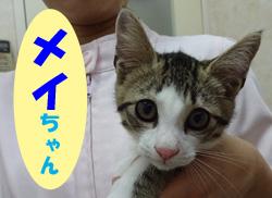 2018.7お友達メイちゃん