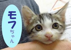 2017.7お友達 モフちゃん