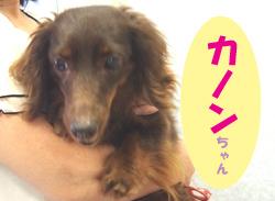 2017.6お友達カノンちゃん
