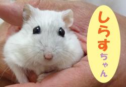 2017.7お友達 しらすちゃん