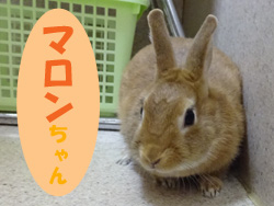2017.11お友達 マロンちゃん