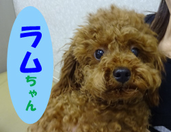 2017.6お友達ラムちゃん