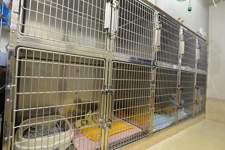 入院室。手術を終えた犬や猫が入院しています。伝染病にかかっている、犬や猫は別の入院室で治療を受けます。